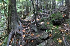 Fall Foliage 2015 Northern MN