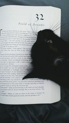 bookpillows:  beckisbookshelf:  Fleur, look! A book pillow. Get...