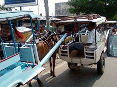 Dokar, famous transportation in sumbawa