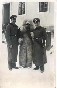 Bizarre Vintage Photos of Nazis Posing with Men in Polar Bear Costumes