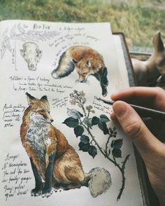 fox, art, and drawing image Art And Illustration, Landscape Illustration, Art Fox, Arte Sketchbook, Nature Journal, Book Journal, Sketchbook Inspiration, Sketchbook Ideas, Art Journals