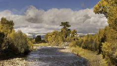 Autumn Elk River Cotton woods after first snows on Pilots Nob