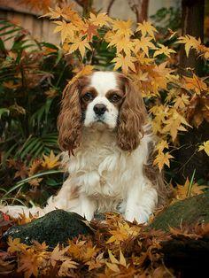 Autumn Gaze | Flickr - Photo Sharing!