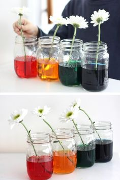 Fun color changing flower science and STEM for kids! Easy Spring science with color changing flowers is a bit of magic and natural science! Science Area Preschool, Science Activities For Toddlers, School Age Activities, Science Experiments For Preschoolers, Science Week, Science Crafts, Stem Science, Science Projects, Preschool Activities