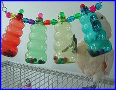 Bottles with beads parrot toy. Interesting idea that has so many possibilities. Could vary the contents of the bottles and the bottles themselves. Diy Parrot Toys, Diy Bird Toys, Parrot Pet, Diy Toys, Bird Crafts, Cockatoo Toys, Parakeet Toys, Amazon Parrot, Budgies