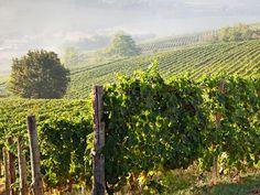 Seedamm Plaza Sommelier Stefan im Herzen des Piemont Vineyard, Wine, Outdoor, Outdoors, Vine Yard, Vineyard Vines, Outdoor Living, Garden