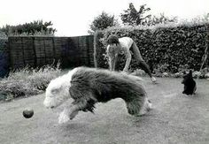 Playing ball with Martha
