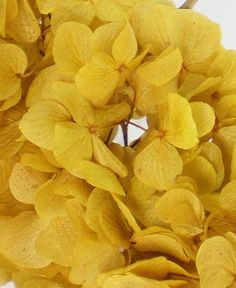 Also see: preserved flowers petal cones pressed flower stickers naturals botanicals hydrangeas yellow decorations Hydrangea Flower, Yellow Flowers, Hydrangeas, Lilacs, Wedding Table Centerpieces, Flower Centerpieces, Potager Bio, Wedding Crafts, Gardens