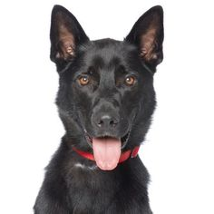 Adoptable Pets   Best Friends Animal Society-Los Angeles