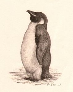 did feel pleased with himself.' by Paul Howard . Original published artwork from 'The Penguin Who Wanted to Find Out' published by Egmont Books in 2004 Media used: Pencil crayon Dimensions: 100 x 140 mm Penguin Drawing, Penguin Tattoo, Penguin Art, Penguin Love, Animal Sketches, Animal Drawings, Art Drawings, Beautiful Sketches, Bird Artwork