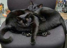 Cuddle Puddle.