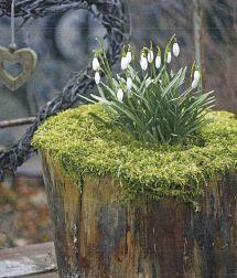 stump, moss, snowdrops