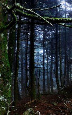 Dark Forest, Attiki, Greece