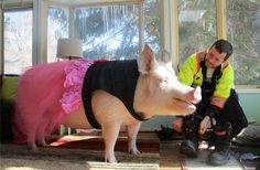 Esther the Wonder Pig looking So Fab in her Snort Life® Dress!!!