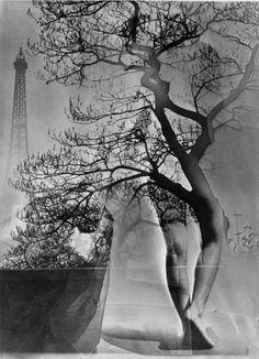 Maurice Tabard, El árbol que anda, 1949