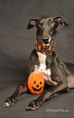 Pumpkin Perfection -- Tales and Tails