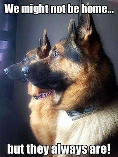 """GSDs, but ALL animal lovers welcome! Also follow our dog training page: https://www.facebook.com/pages/Controlled-Chaos-Dog-Training/311679468843030 Description This is a page that is a good place to call """"home"""" if you are owned by a German Shepherd! We welcome ALL animal lovers here! :) My GSDs tribute video: http://www.youtube.com/watch?v=QDZ7ChnYaEw *The German Shepherd Dog Community claims no credit for any images posted on this site unless otherwise noted. Images on this blog are"""