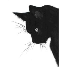 Cat Print, Black Cat, Printable Art, Cat Art, Art Print, Wall Decor,... (320 PHP) ❤ liked on Polyvore featuring home, home decor, wall art, cats, animals, halloween, backgrounds, filler, art and borders