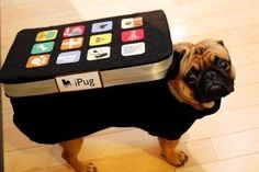 12 insanely cute Halloween costume ideas for your pet | Canadian Living