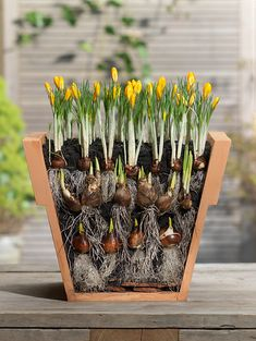Welcome to the diy garden page dear DIY lovers. If your interest in diy garden projects, you'are in the right place. Creating an inviting outdoor space is a good idea and there are many DIY projects…MoreMore Garden Bulbs, Planting Bulbs, Planting Flowers, Flower Gardening, Flowers Garden, Container Plants, Container Gardening, Gardening Tips, Organic Gardening