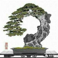 820 Likes, 9 Comments - Bonsai Gram ( - Japanese Garden Design Indoor Bonsai Tree, Bonsai Plants, Bonsai Garden, Plantas Bonsai, Ikebana, Bonsai Artificial, Bonsai Forest, Bonsai Styles, Japanese Garden Design