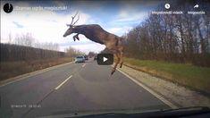Videó: Röptében kapta el a szarvast a fedélzeti kamera Borsodban - Körkép. Country Roads, Youtube, Youtubers, Youtube Movies