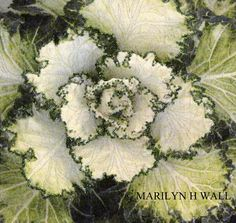 A Study in Green by Marilyn Wall | fiber artist