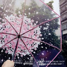 Sweet cherry blossom students transparent umbrella