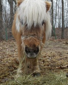 Rescued miniature pony