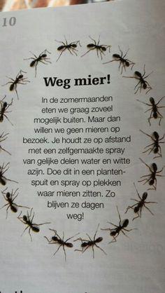 Weg met mieren