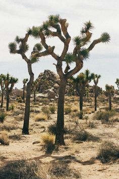 joshua tree national park • bird is the word