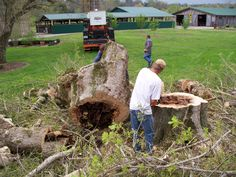 this is a large tree we removed that was diseased and a danger to fall on the pumphouse.