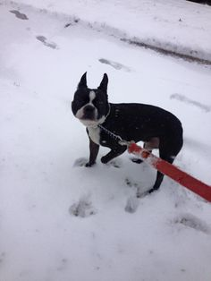 Paden was not happy about the snow. Taken by sitter Melanie.