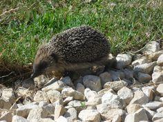Look who's enjoying a morning stroll around the gardens. Gardens, Animals, Animais, Animales, Animaux, Garden, Animal, Garden Types, Yards