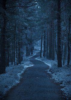 Dark Forest | Flickr - Photo Sharing!