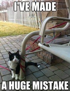 I'm sure Kismet thinks this every time I put him outside.