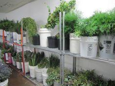7 Best Inventory wholesale flowers coolers images | Coolers, Fresh Wholesale Gl Vases Phoenix Az on