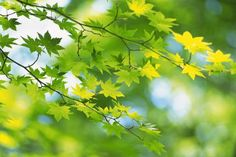 natural leaves close up green tree branch art (to get full size image visit the site)