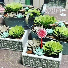 Stampin Up Succulents