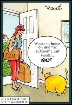 Welcome home! Oh, and the automatic cat feeder...NICE!