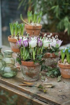 beautiful vintage flower pots with early spring flowers spring Garden Bulbs, Garden Pots, Container Plants, Container Gardening, Beautiful Gardens, Beautiful Flowers, Early Spring Flowers, Spring Bulbs, Deco Floral