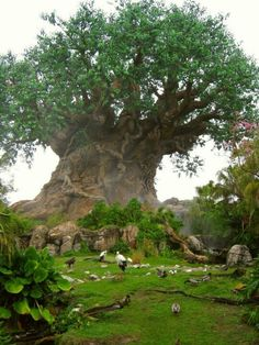 Baobab,Tree of Life. . this simple fact that THIS is REAL absolutely blows my mind