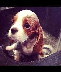 Dog beauty