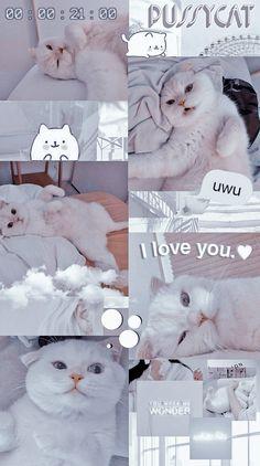 Funny Cat Wallpaper, Cute Panda Wallpaper, Cartoon Wallpaper Iphone, Bear Wallpaper, Cute Disney Wallpaper, Cute Cartoon Wallpapers, Cute Kittens, Cute Baby Cats, Cute Cats And Dogs