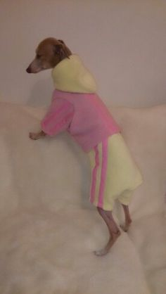 The trackie  handmade by Kcls dog design  check us out on fb
