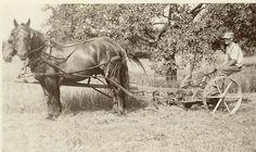 farm horse plow