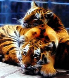 Twin Tigers by Lashington.deviantart.com on @DeviantArt