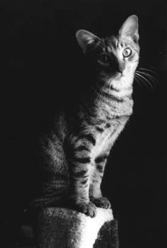 Miss Kitty, the Early Days – posing for Chris, who took this portrait