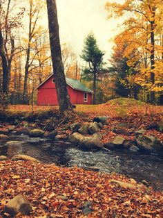 Zafer Dede • cape-cod-prepster:   Vermont, what happens there...