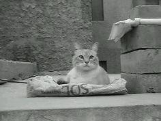 A Buddha cat